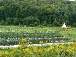 The Abode Farm