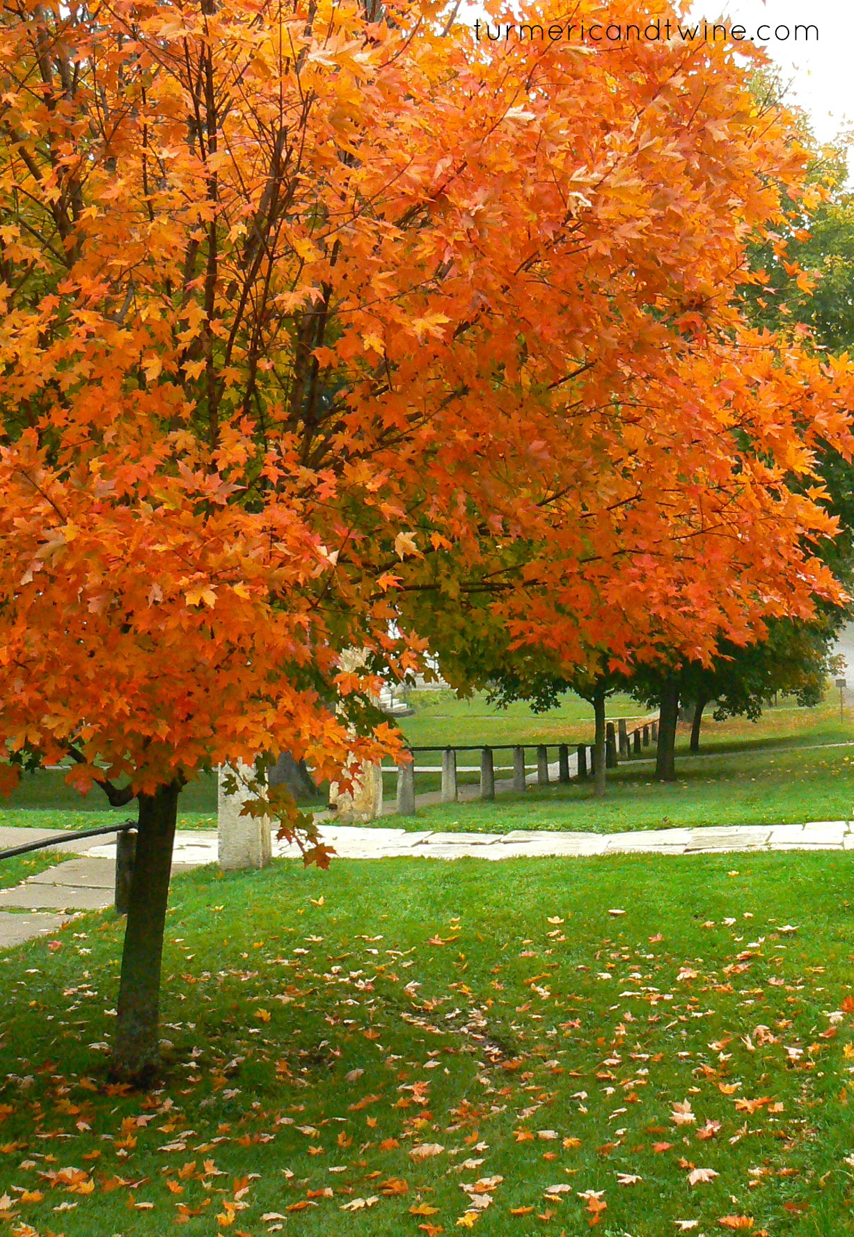 Autumn Colours Turmeric And Twine