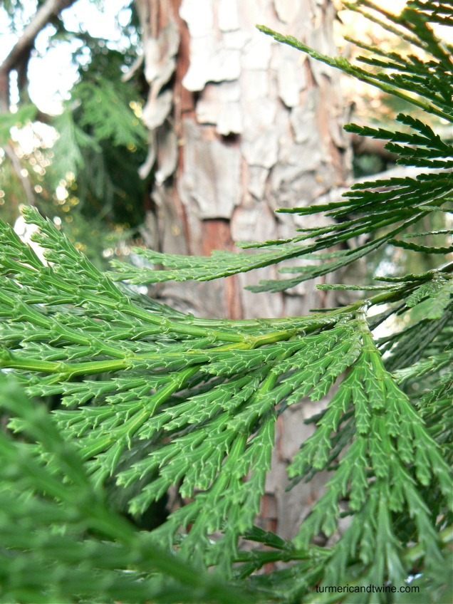 CA tree detail