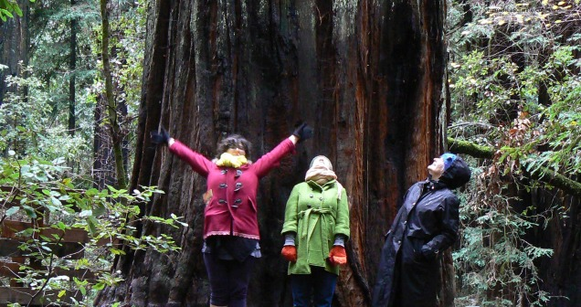 redwoods and us