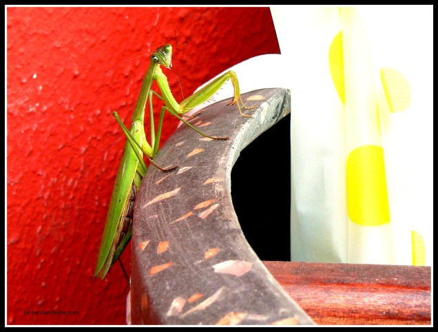 praying mantis on pot