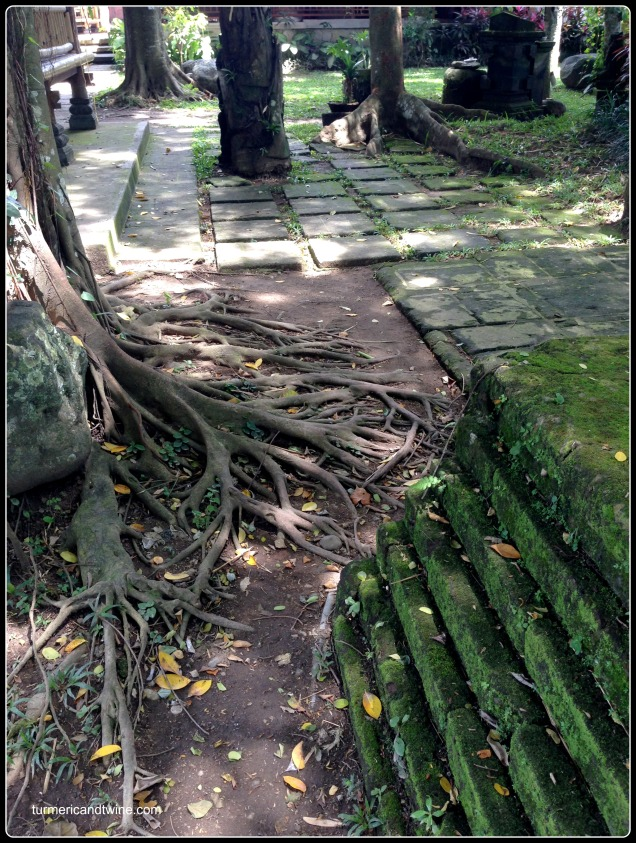 Awesome tree roots in Ubud, Bali