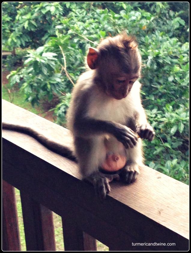 baby monkey pondering