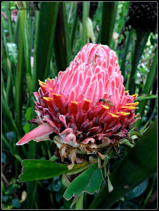 flower in Bali with bee