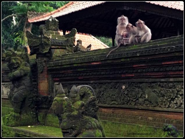 monkey family Bali