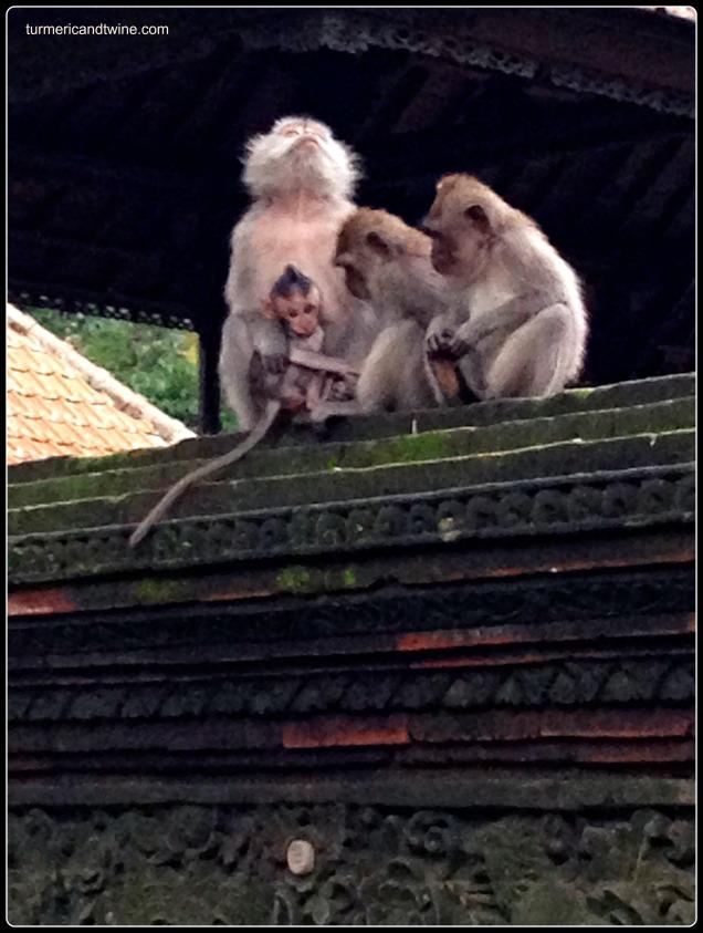 monkey family2 Ubud