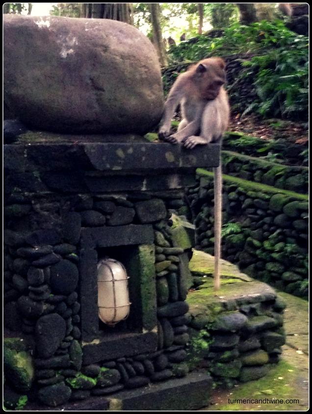 monkey on light