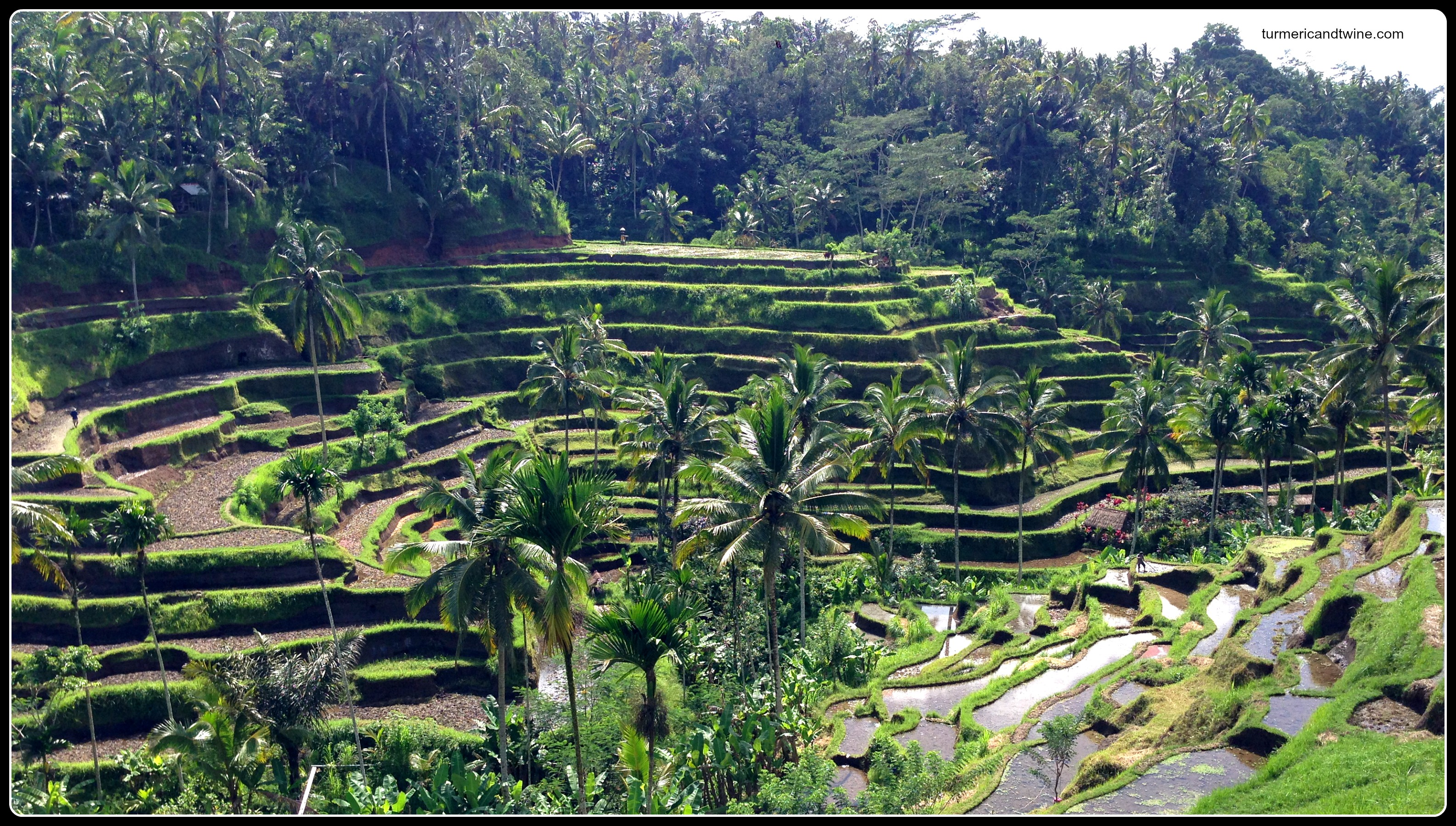 ubud s stunning rice terraces turmeric and twine