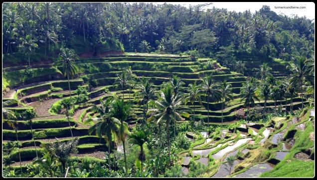 Rice terrace turmeric and twine for Terrace ubud bali
