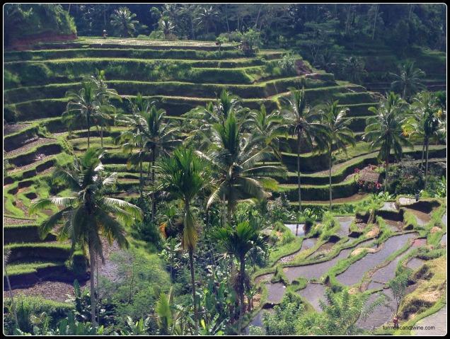 rice terrace Ubud, Bali