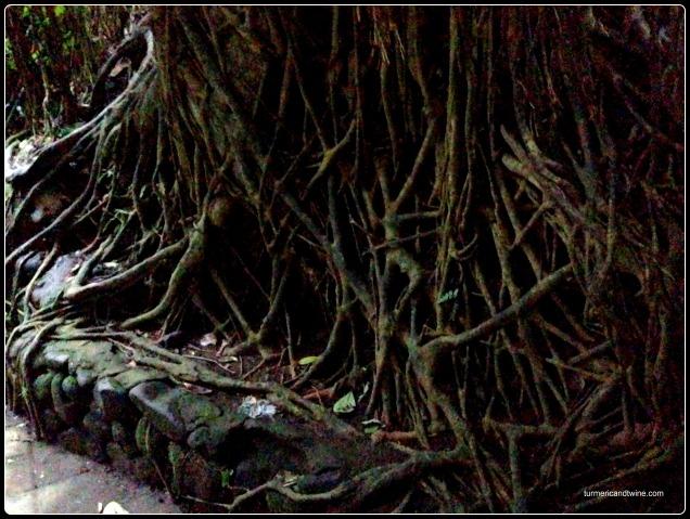 tree and root web Ubud