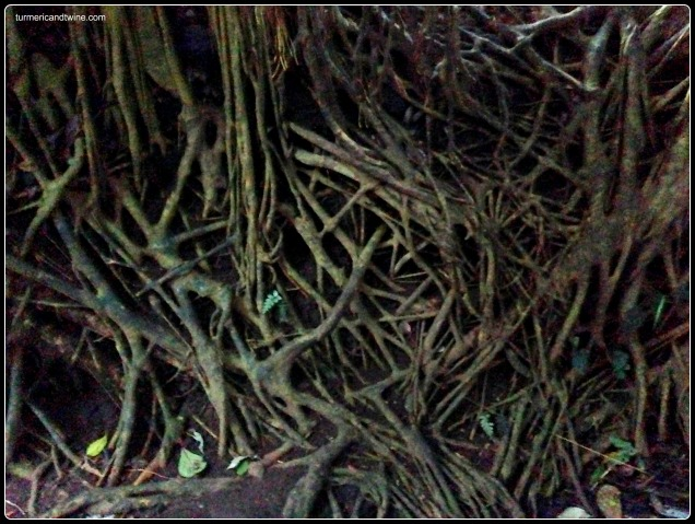 Tree root web Ubud