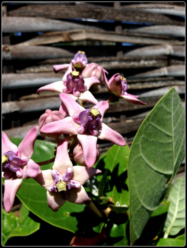 Gili Air flowers