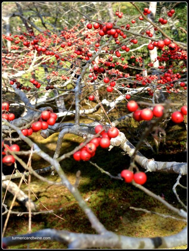 Silver temple berries.jpg