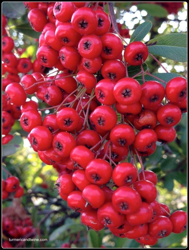 Toji temple berries.jpg