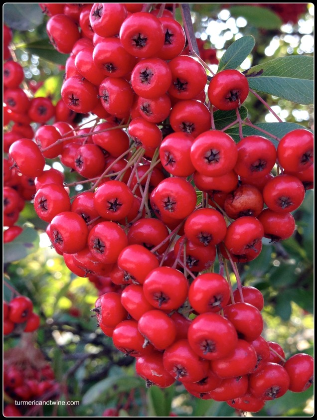 Toji temple berries.jpg