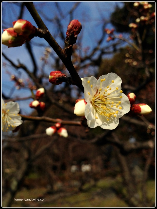 toji temple flower.jpg