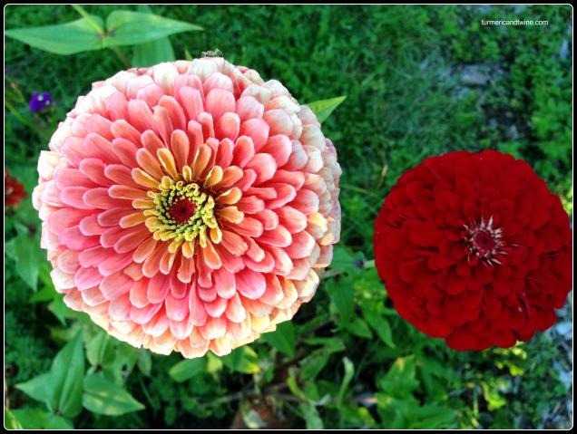 abode flower 2