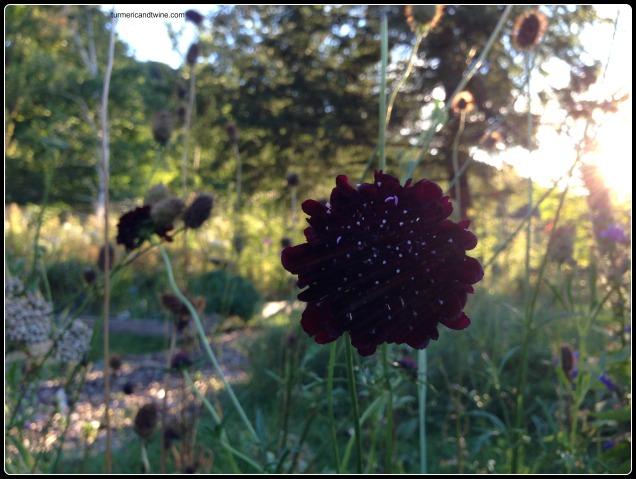 abode flower 3