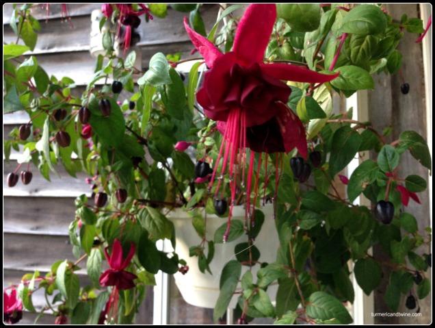 abode flower 4