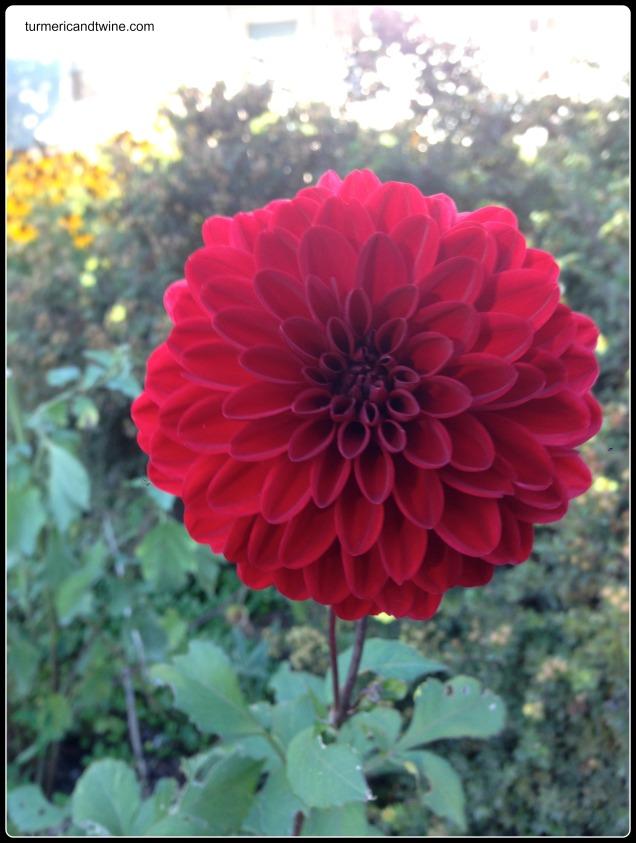 abode flower
