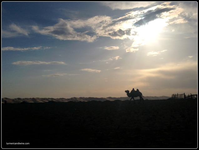 camel silhouette on the Gobi desert, Mongolia