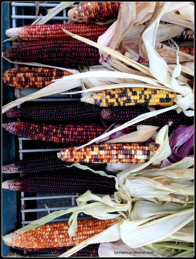colourful fall corn