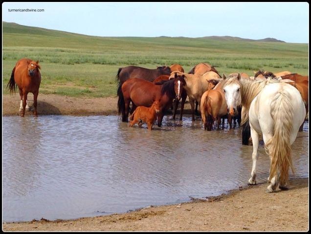 Horses on the Steppe, Mongolia