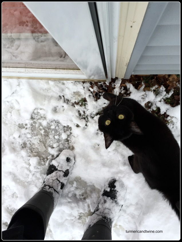 snow and panther